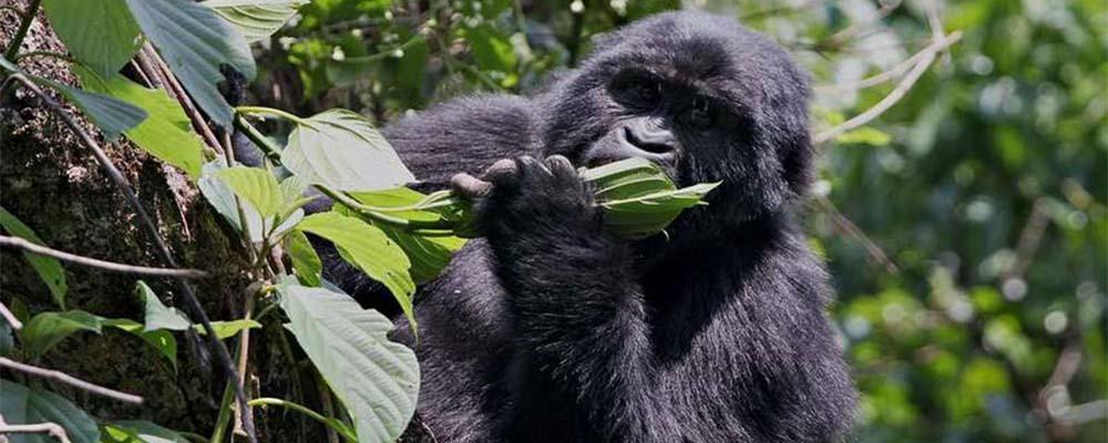 3 days Uganda gorilla and lake bunyonyi safari