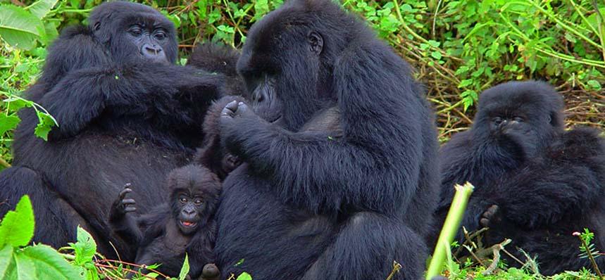 4 Days bwindi and lake mburo park safari.