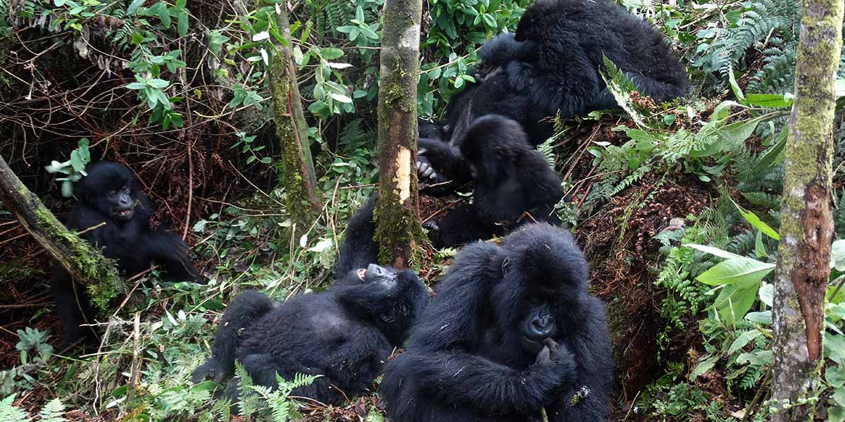 5 Days gorilla and wildlife safari