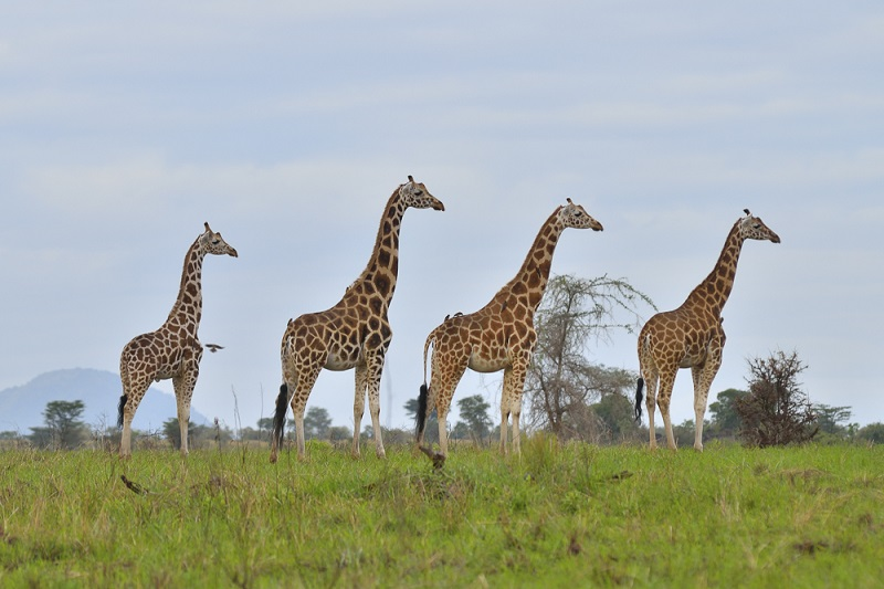 Kidepo Valley National Park lies