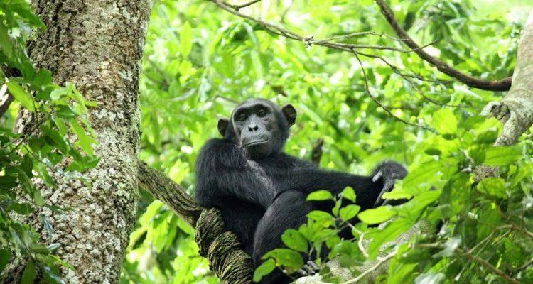 3 Days Nyungwe Forest Safari