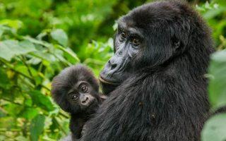 4 Days Virunga & Nyiragongo Hike
