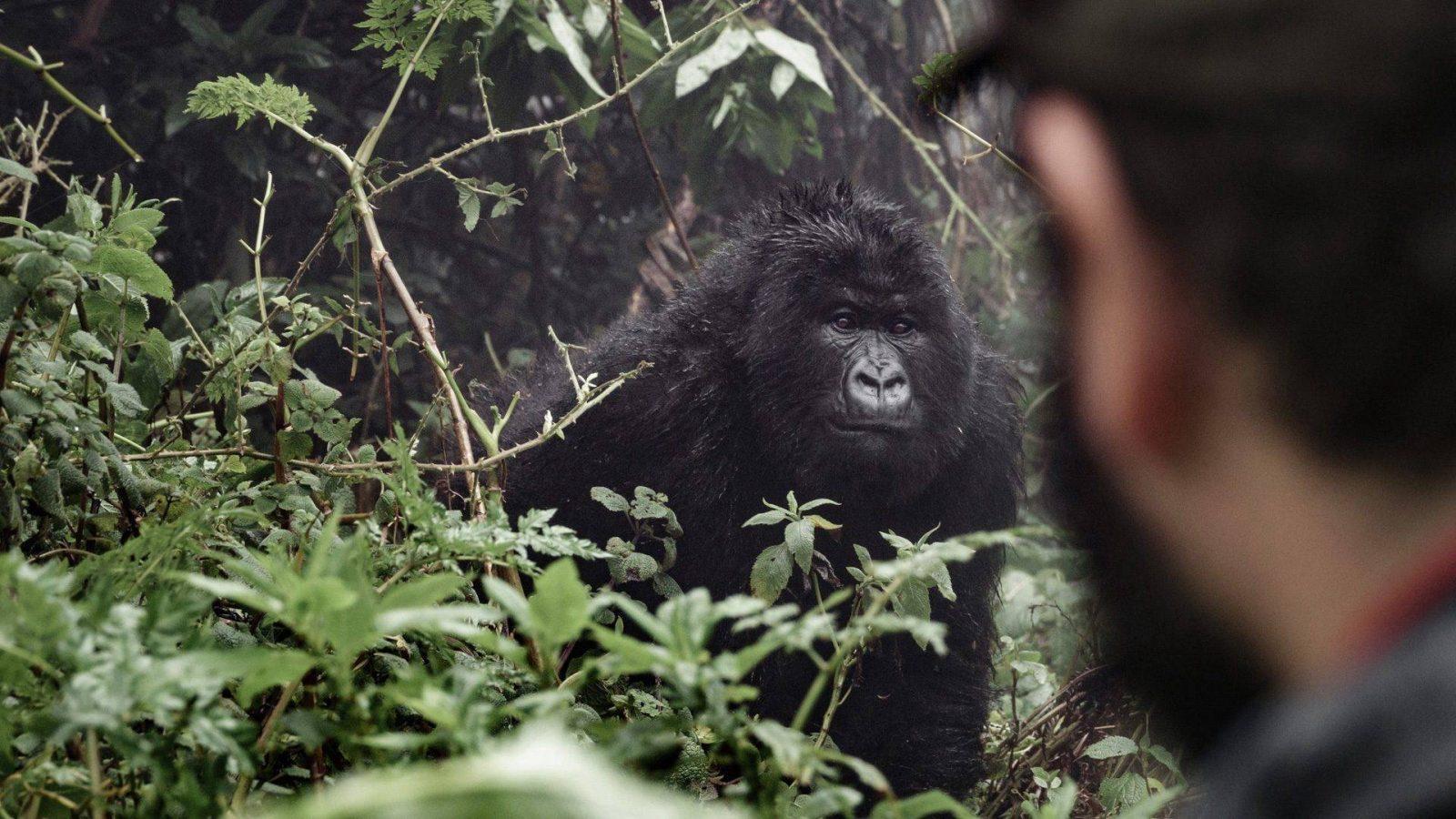 13 Days Uganda Primates & Wildlife Safari