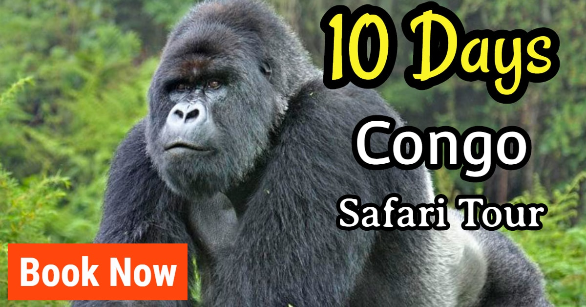 long gorilla trekking tour