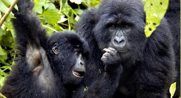 10 Days Congo Safari Tour