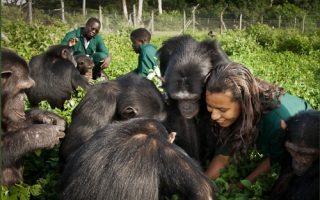 1 Day Ngamba Island Chimpanzee Tour