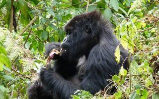 5 Days Bwindi Gorillas & Jinja water rafting safari
