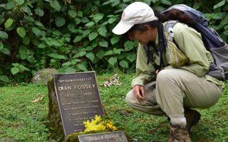 2 Days Dian Fossey Hike Safari