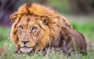 15 Days Best Of Uganda Safaris