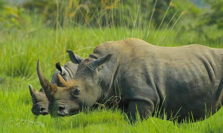 15 Days Uganda Primates and Wildlife Safari