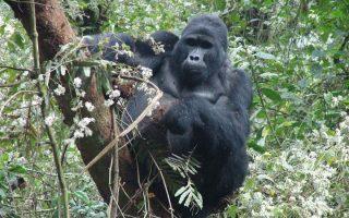 10 Days Rwanda Primates & Wildlife Safari