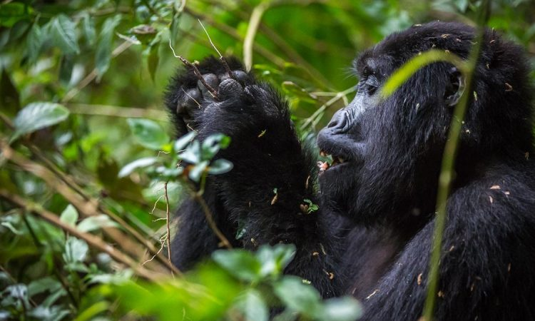 5 Days Uganda Primates & Wildlife Safari