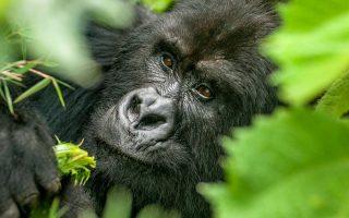 5 Rwanda Volcanoes & Akagera National Park safari