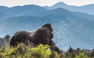 7 Days Rwanda, Uganda, & Congo Safari