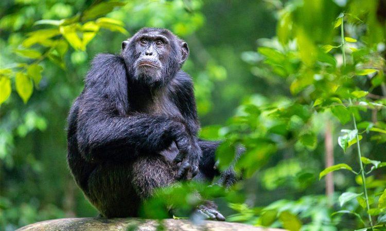 14 Days Best of Rwanda safari