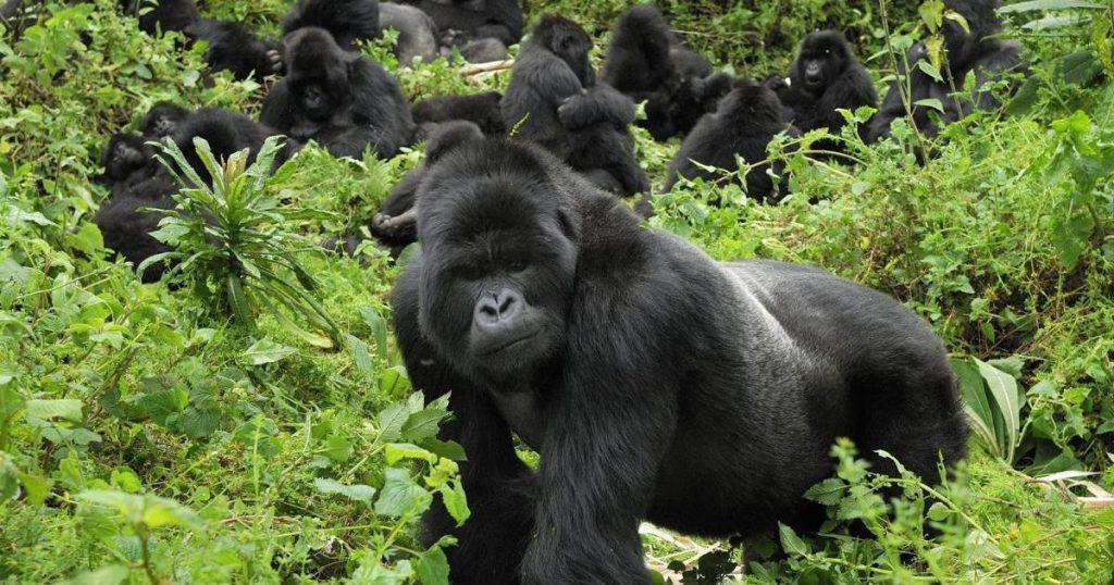 4 Days Uganda Gorillas & Leisure Safari