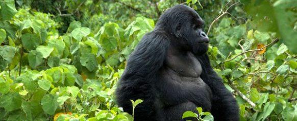 Luxury Gorilla Trekking Uganda