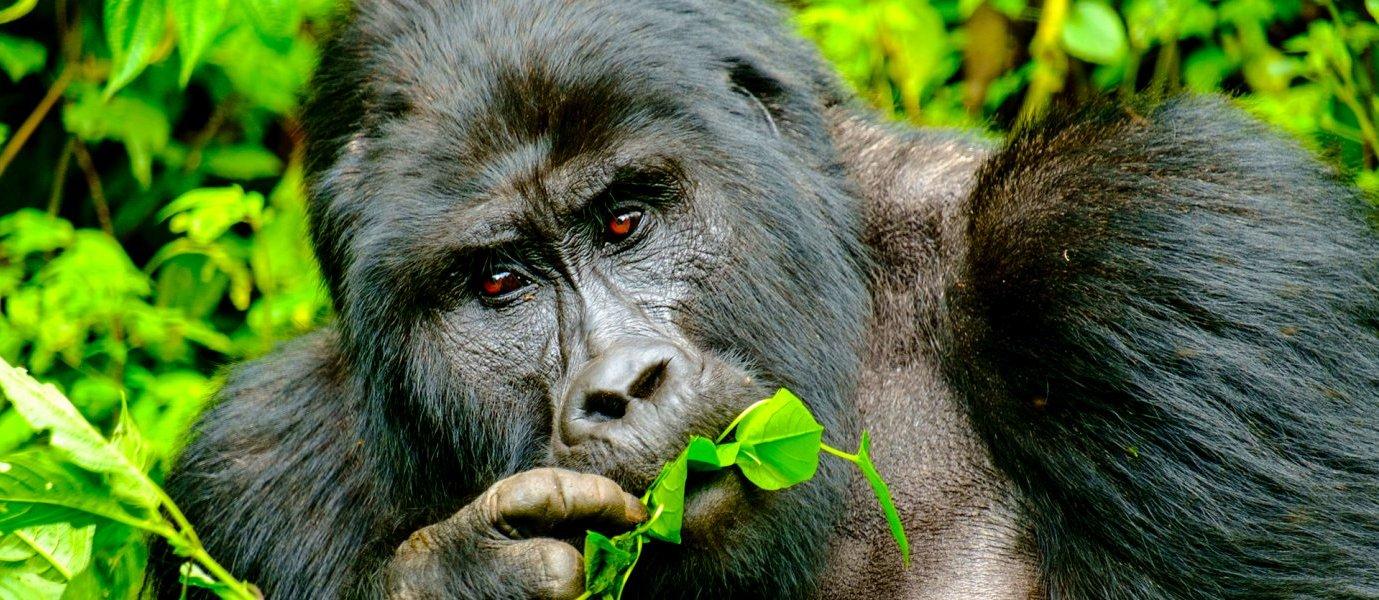 How Much is Gorilla Trekking in Bwindi National Park